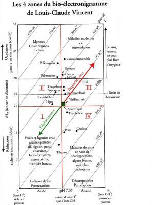 bioelectronigramme-1.jpg